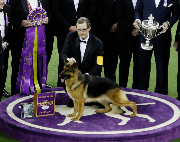 westminster dog show 028 - These are the major economic benefits of dog shows